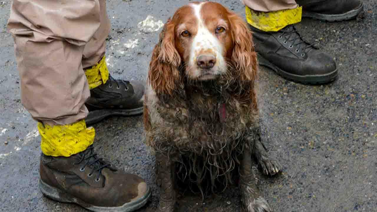 A search dog waits to be washed by the feet of Washington National Guardsmen after working the debris field created by the mudslide near Oso, Wash.