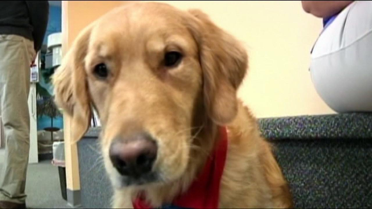 Dentist uses therapy dog for young patients