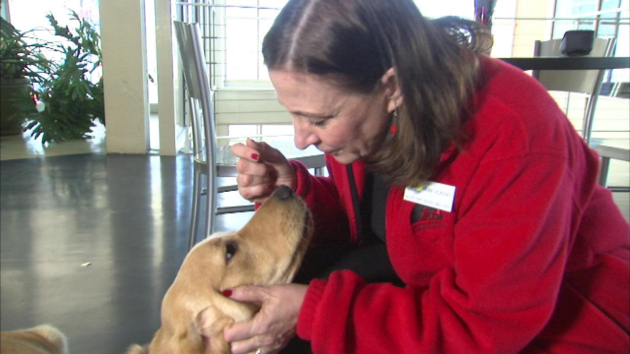 Service dogs have changed the lives of many people with disabilities.