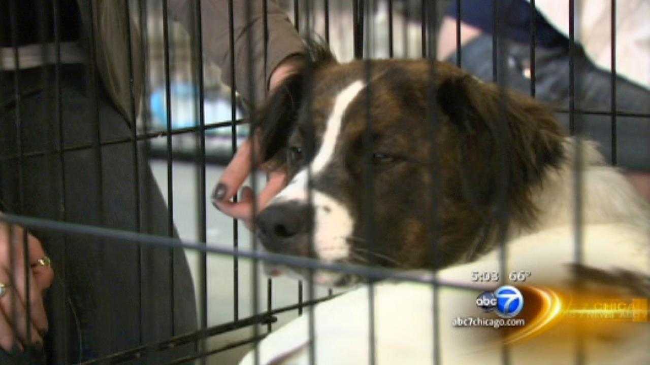 Chicagoans adopt nearly 30 pets displaced by Oklahoma tornado