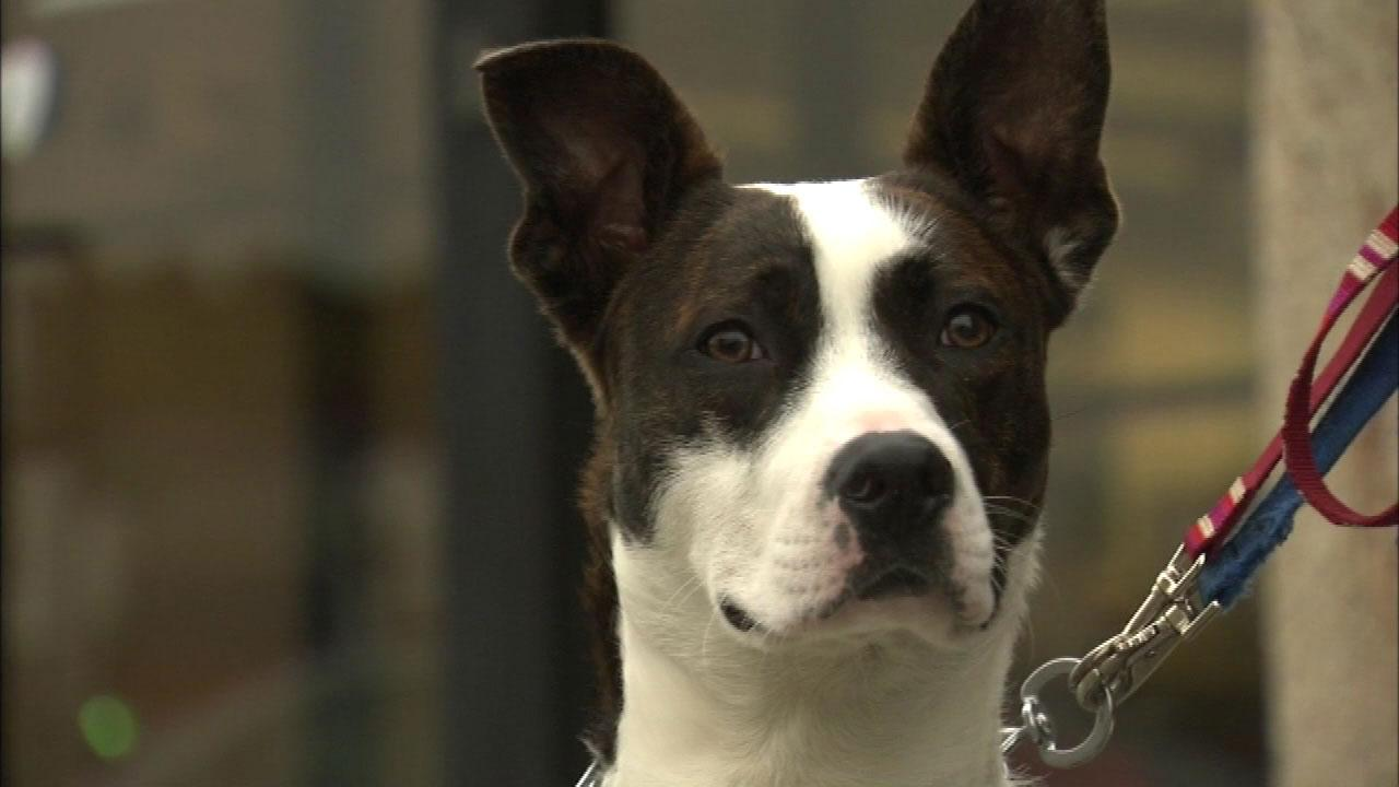 Wright-Way Rescue dogs and cats were placed in foster homes after a school bus crashed into the Niles animal shelter Wednesday afternoon.