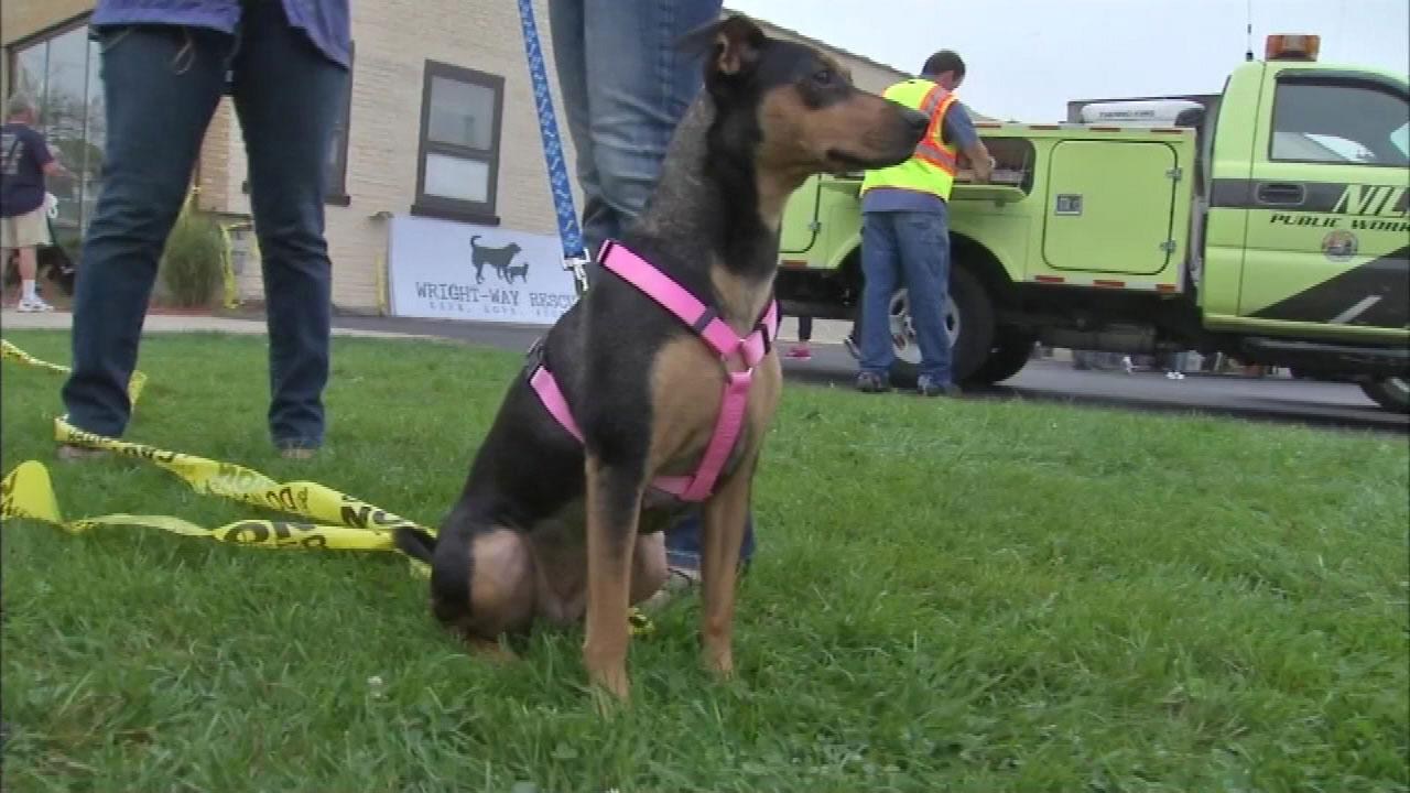 Wright-Way Rescue dogs and cats were placed in foster homes after a school bus crashed into the Niles animal shelter.
