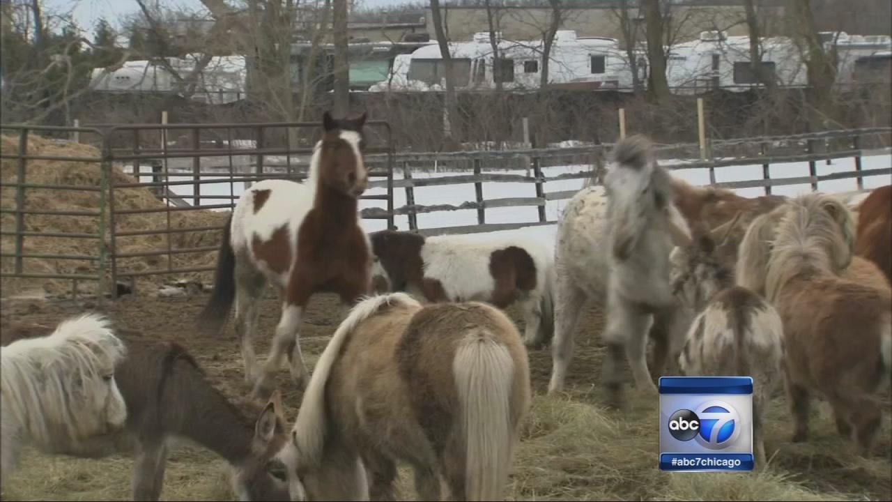 Volunteers help relocate animals