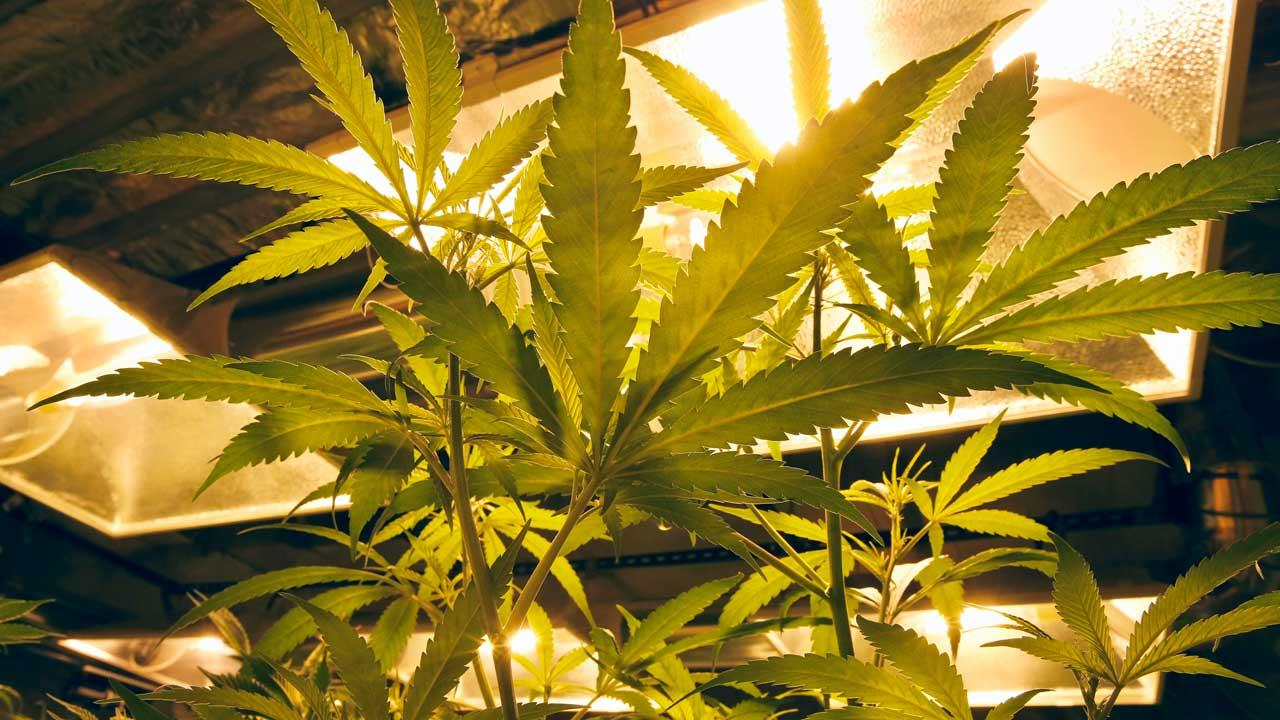 Cook Co. commissioner calls for marijuana task force for Ill.