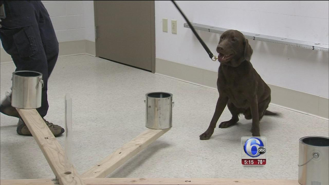 Dog could hold key to detecting cancers