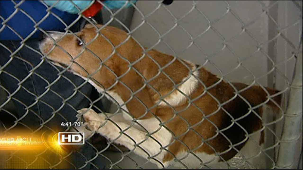 Wake County Animal Shelter running at capacity