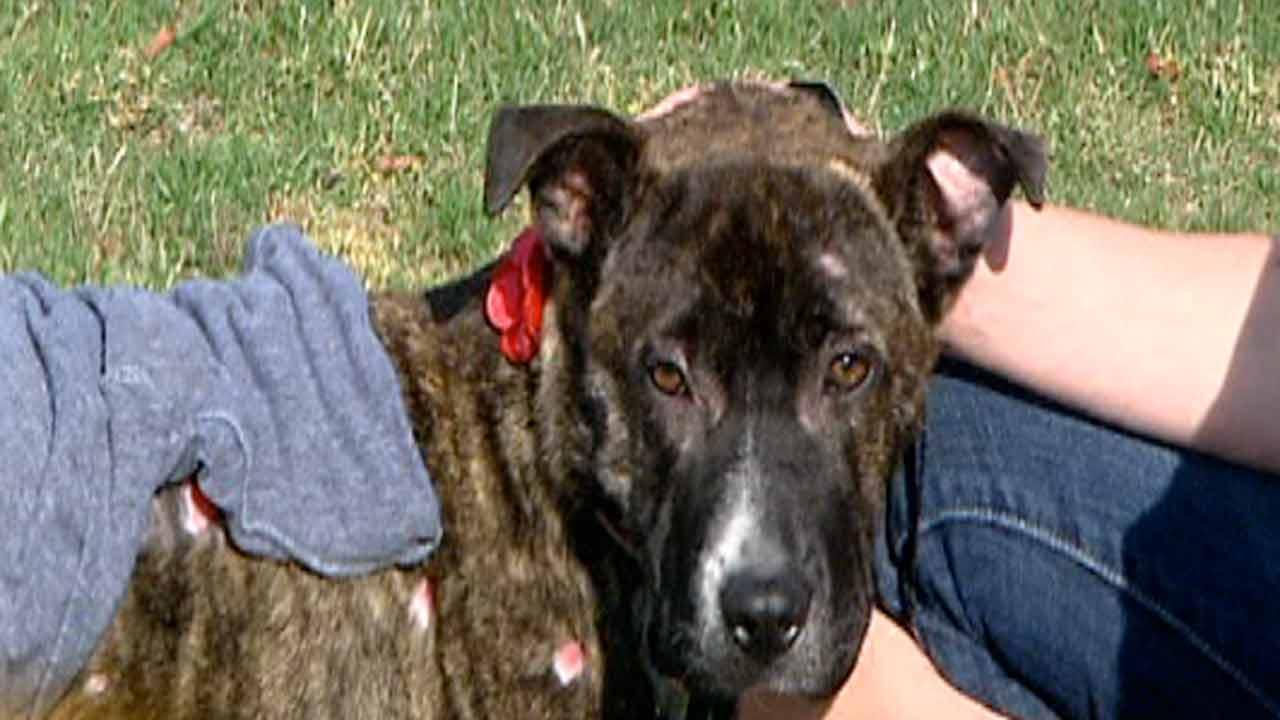 Couple helps injured dog on road to recovery