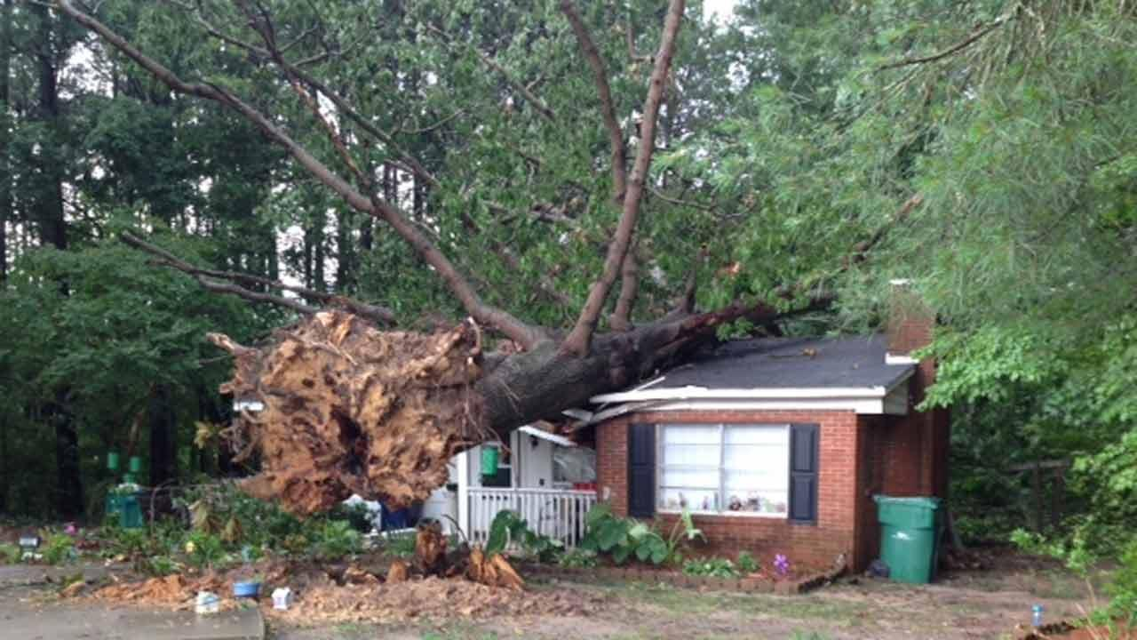 Strong storms uproot trees, drop heavy rain in some areas