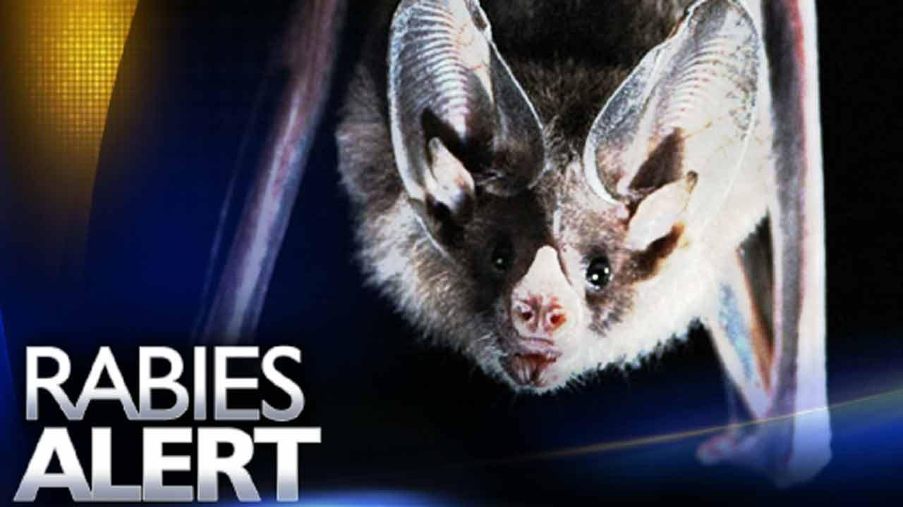 Two new rabies cases in Cumberland County