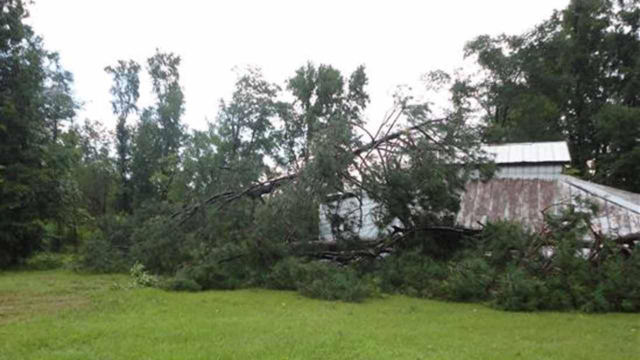 Trees down in Zebulon.