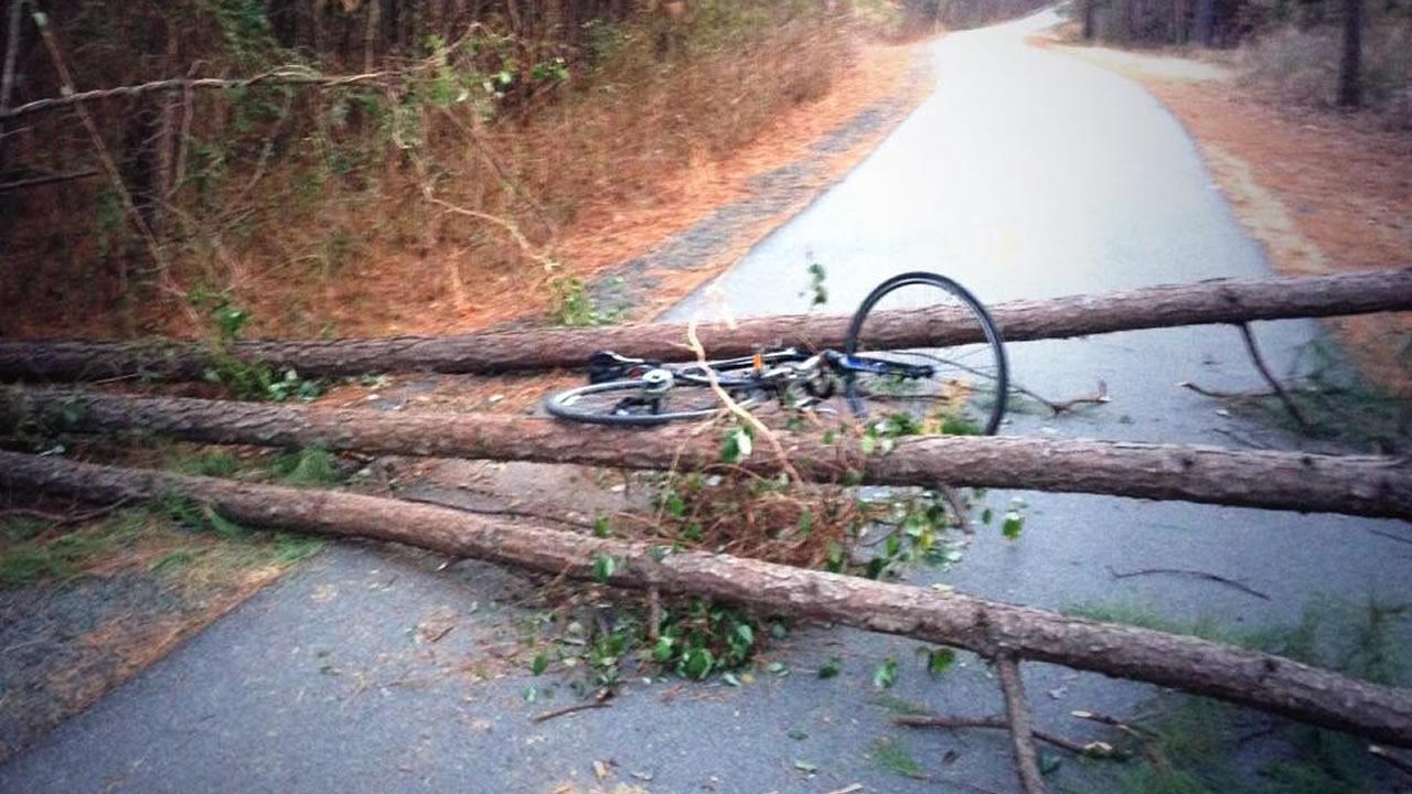 The victims bicycle was found lying on downed trees across the popular cycling path.