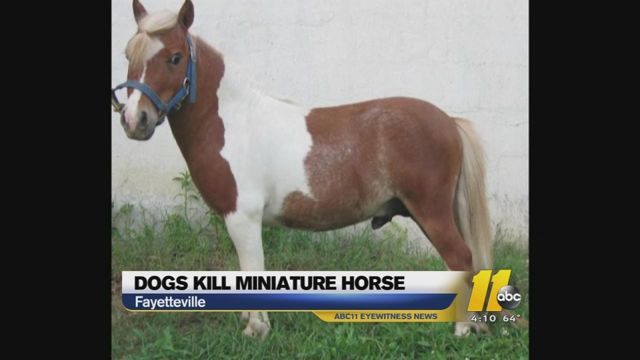 Miniature horse mauled in Fayetteville