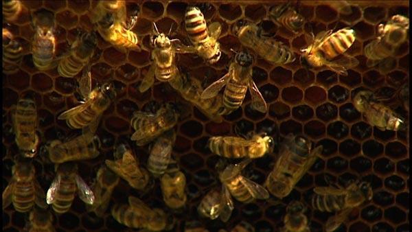 Backyard Beekeeping
