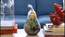 Tips for Making Your Own Terrariums