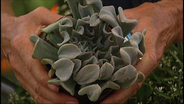 Low-Cost Gardening with Trendy Succulents