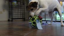 Make Your Own DIY Dog Toys and Puzzles