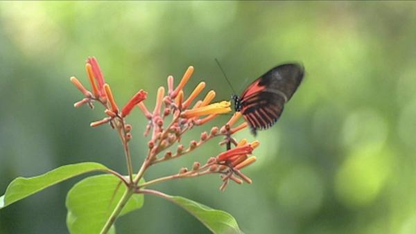 How to Attract Birds and Butterflies to Your Garden With the Right Plants