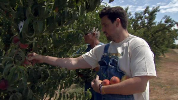 Complete Episode: Picking Peaches for Cooking