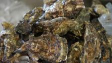Oaklands Fresh Oysters