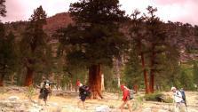 Fan Hike Through High Sierras