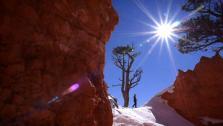 Bryce Canyon Beauty