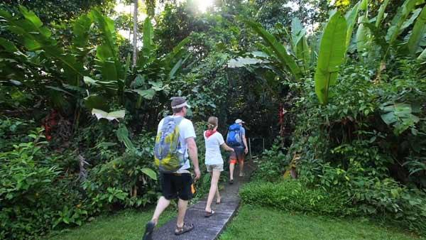 Hiking Jungles of Tortuguero National Park